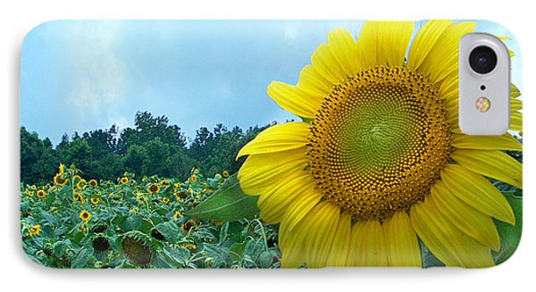 Sunflower Field Of Yellow Sunflowers By Jan Marvin Studios  IPhone Case