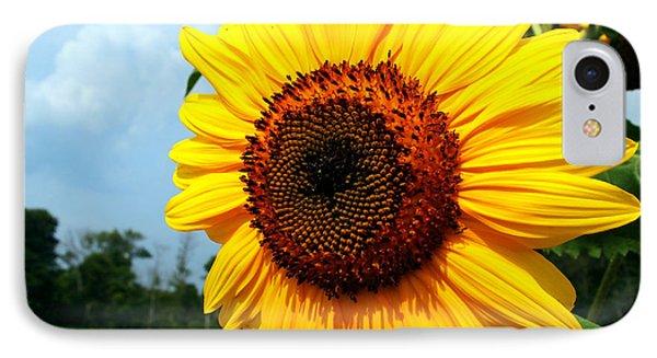 Sunflower In Summer IPhone Case
