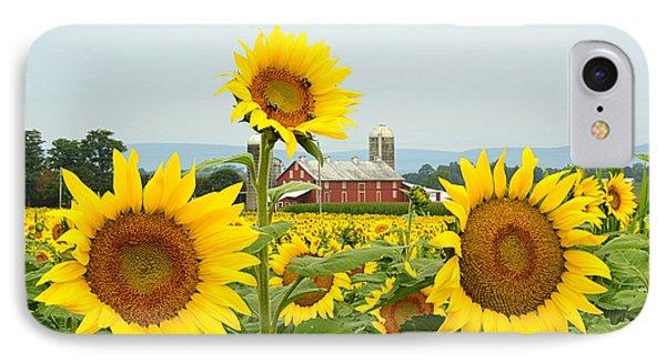 Sunflower Splendor #1 - Mifflinburg Pa IPhone Case