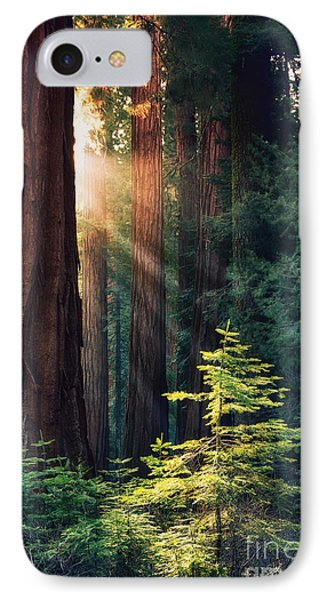 Sunlit From Heaven IPhone Case
