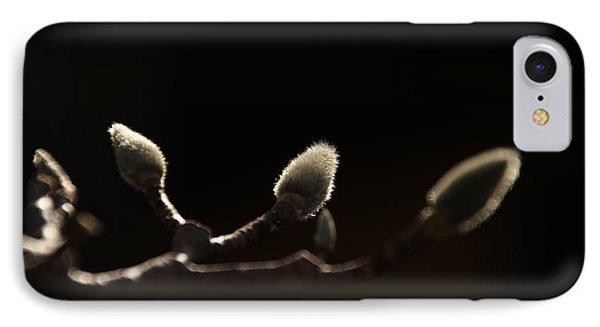 Sunlit Magnolia Buds IPhone Case