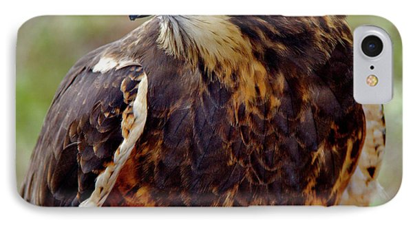 Swainson's Hawk IPhone Case