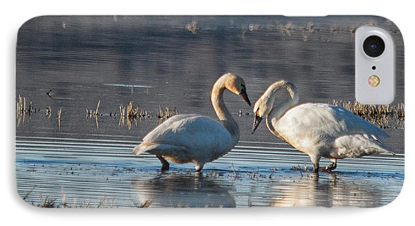 Swans In Pose IPhone Case