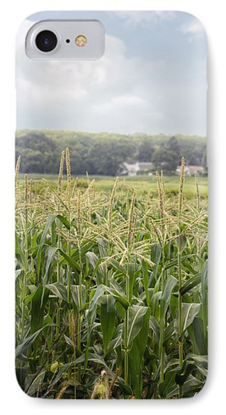 Sweet Corn Grows On A Connecticut Farm IPhone Case