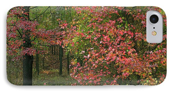 Sweetgum In Autumn At Gillham Lake IPhone Case