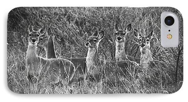 Texas Deer IPhone Case