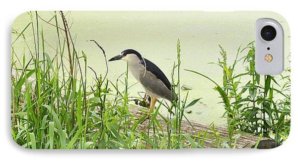 The Black-crowned Night Heron IPhone Case