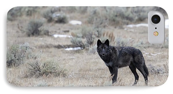 The Black Wolf IPhone Case