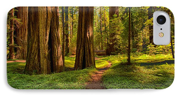 The Destination - California Redwoods I IPhone Case