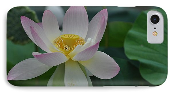 The Lotus IPhone Case
