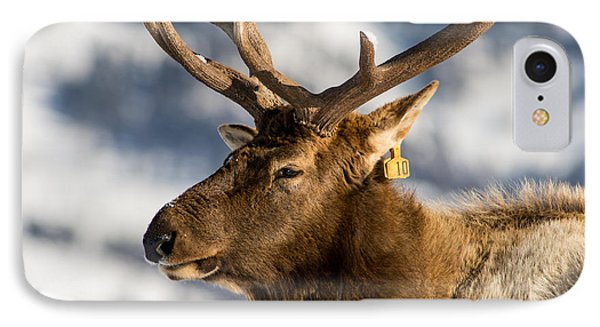 The Yellowstone Elk # 10 IPhone Case