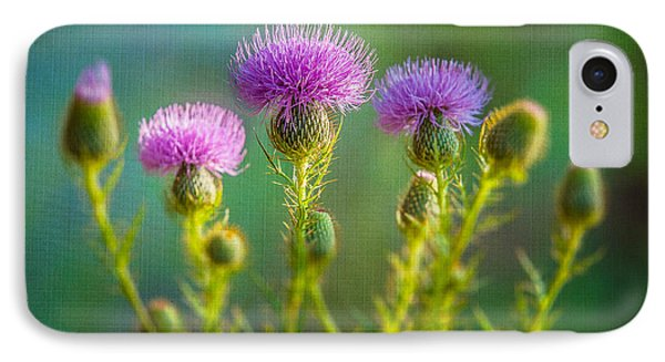 Thistle In The Sun IPhone Case