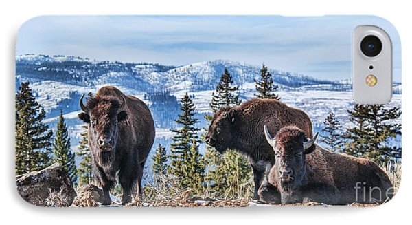 Three Bison IPhone Case