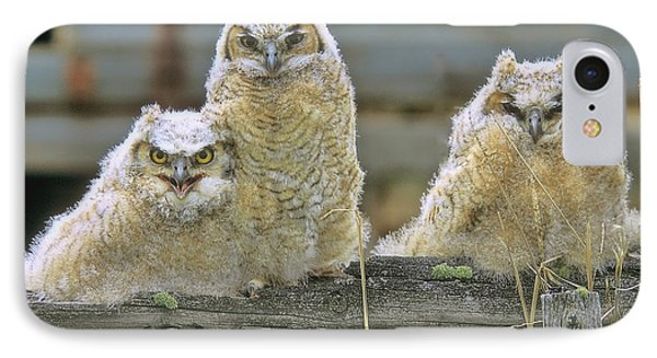 Three Great-horned Owl Chicks IPhone Case
