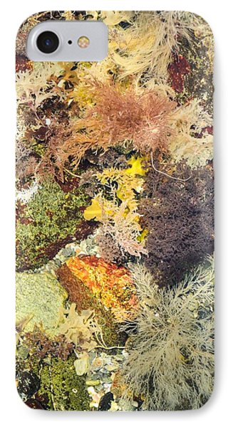 Tidal Pool Color IPhone Case