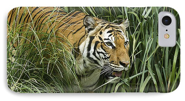 Tiger4 IPhone Case