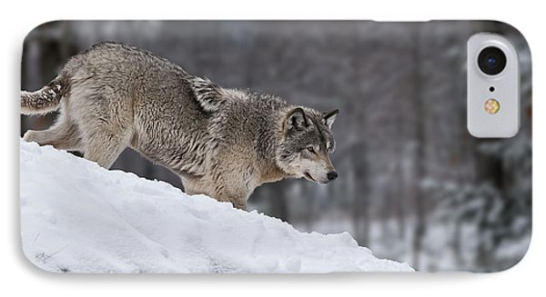 Timber Wolf On Hill IPhone Case