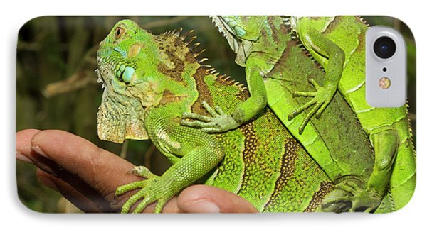 Belize iPhone 8 Case - Tourist With Juvenile Green Iguanas by William Sutton