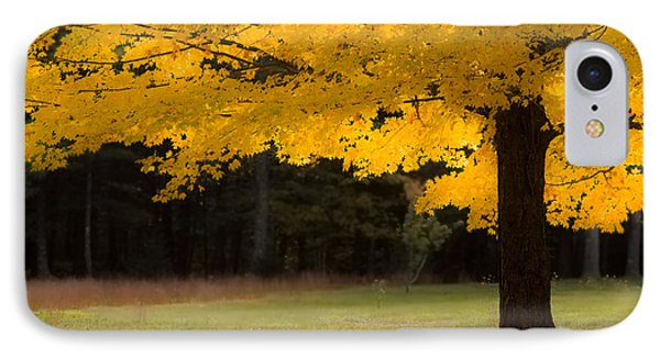 Tree Canopy Glowing In The Morning Sun IPhone Case