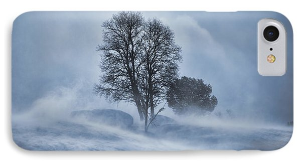 Tree In Snow Blizzard IPhone Case