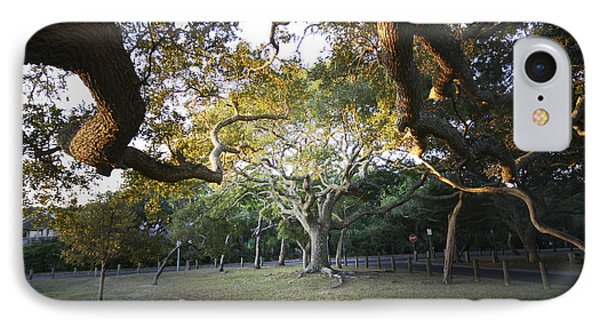 Tree In St. Augustine Park IPhone Case