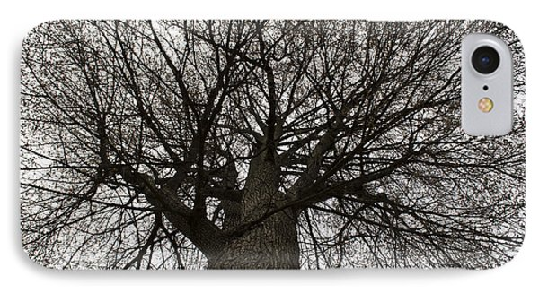 Tree Web IPhone Case