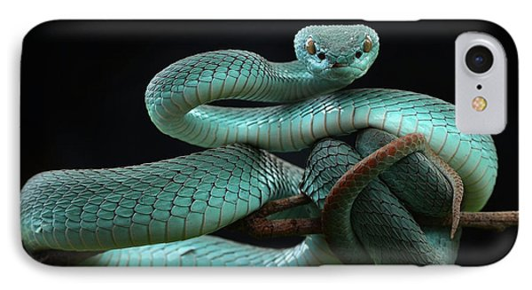 Trimeresurus Insularis [blue] IPhone Case