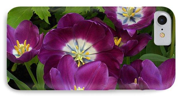 Triumph Tulips Negrita Variety IPhone Case