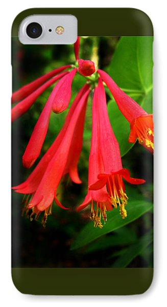 Wild Trumpet Honeysuckle IPhone Case
