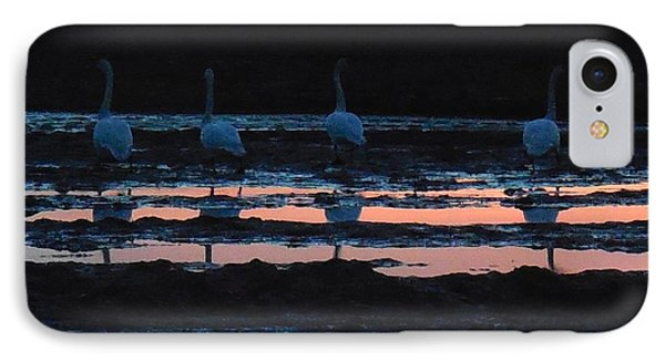 Trumpeter Swans In Pink IPhone Case