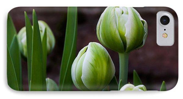 Tulip Buds IPhone Case