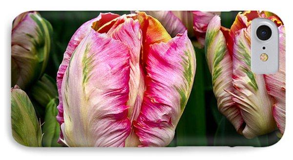 Tulips 02 IPhone Case