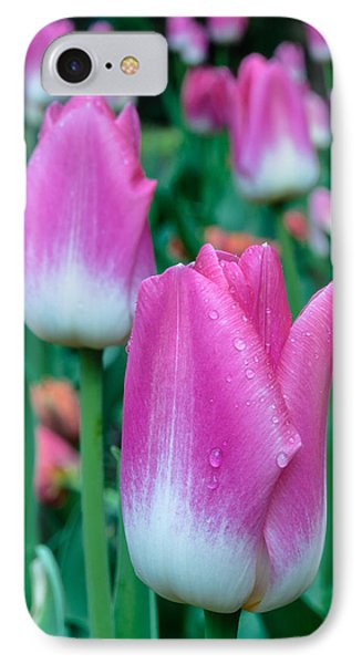 Tulips-tulips-tulips IPhone Case