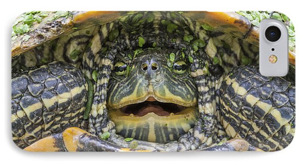 Turtle Covered With Duckweed IPhone Case