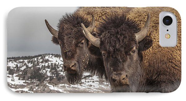 Two Bison IPhone Case