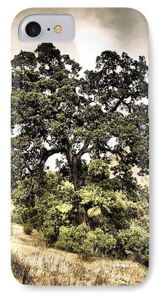 Valley Oak IPhone Case