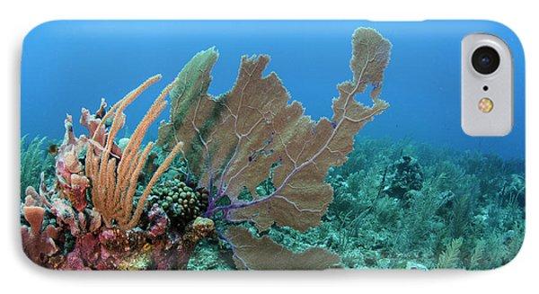 Belize iPhone 8 Case - Venus Sea Fan (gorgonia Flabellum by Pete Oxford