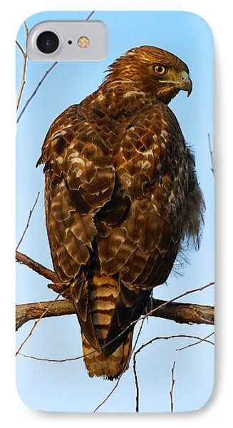 Vigilant Red-tailed Hawk  IPhone Case