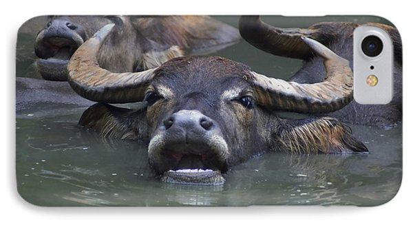 Water Buffalo IPhone Case