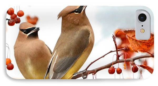 Beautiful Waxwing  IPhone Case