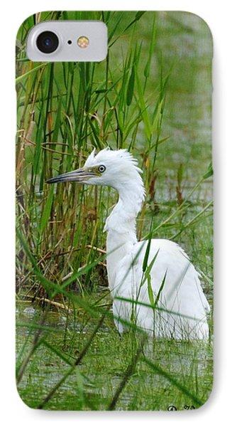 Wet Juvenile Little Blue Heron IPhone Case