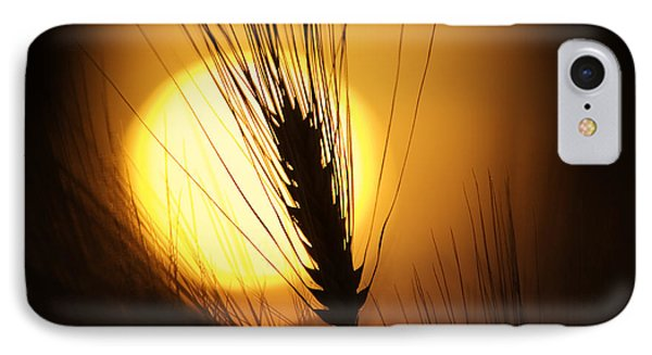 Wheat At Sunset  IPhone Case
