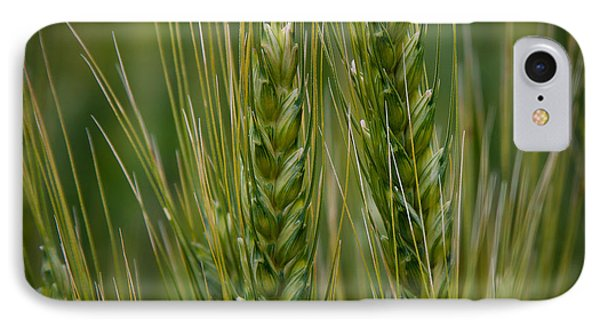 Wheat In The Palouse IPhone Case