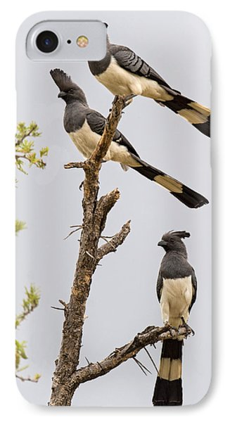 White-bellied Go-away Birds IPhone Case