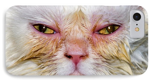Scary White Cat IPhone Case