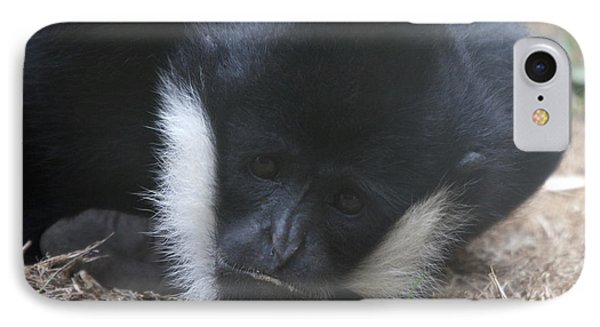 White-cheeked Gibbon - 0004 IPhone Case