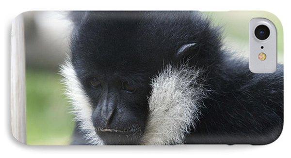 White-cheeked Gibbon - 0005 IPhone Case