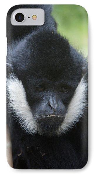 White-cheeked Gibbon - 0008 IPhone Case