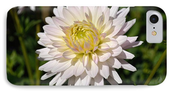 White Dahlia Flower IPhone Case