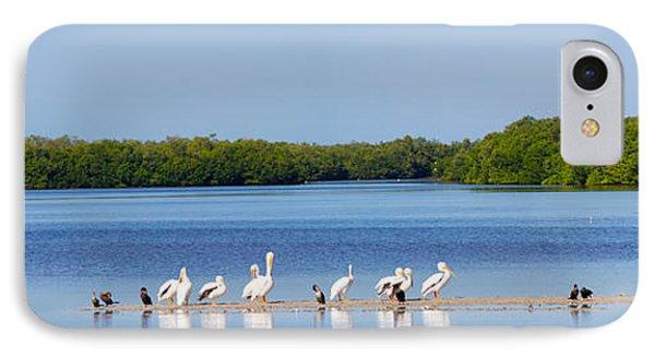 White Pelicans On Sanibel Island IPhone Case